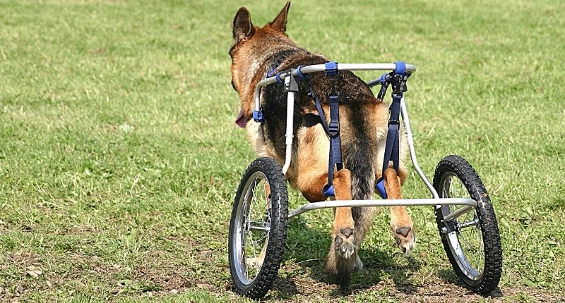 rollators for disabled dogs ireland